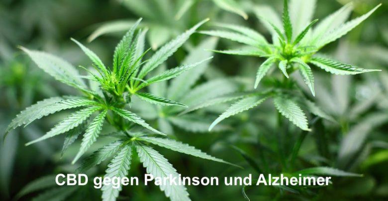 CBD gegen Parkinson und Alzheimer
